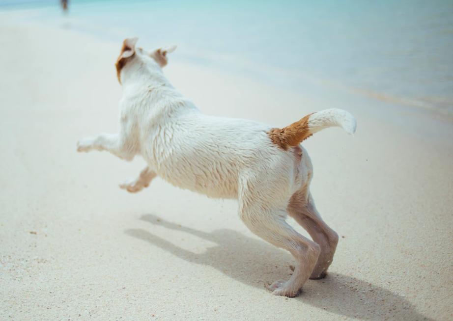 Kroatien-Urlaub mit Hund