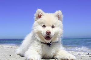 Hundestrände Kroatien