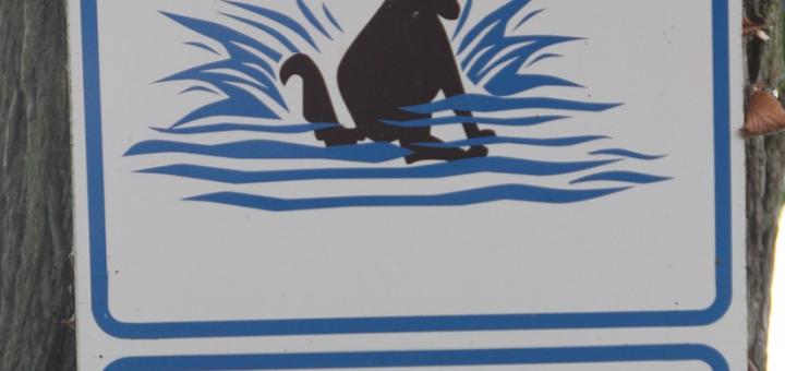 Hundestrand Kroatien