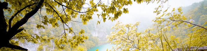 Pflanzen in Kroatien