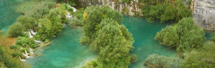 Pflanzenwelt in Kroatien